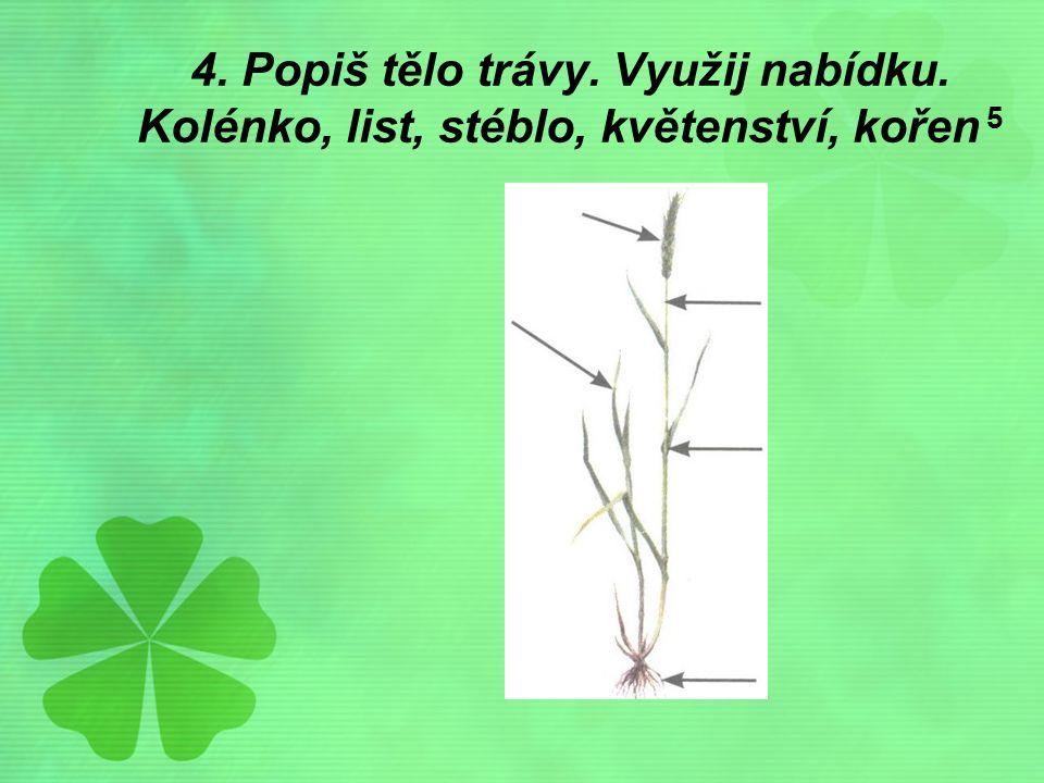 4. Popiš tělo trávy. Využij nabídku. Kolénko, list, stéblo, květenství, kořen 5