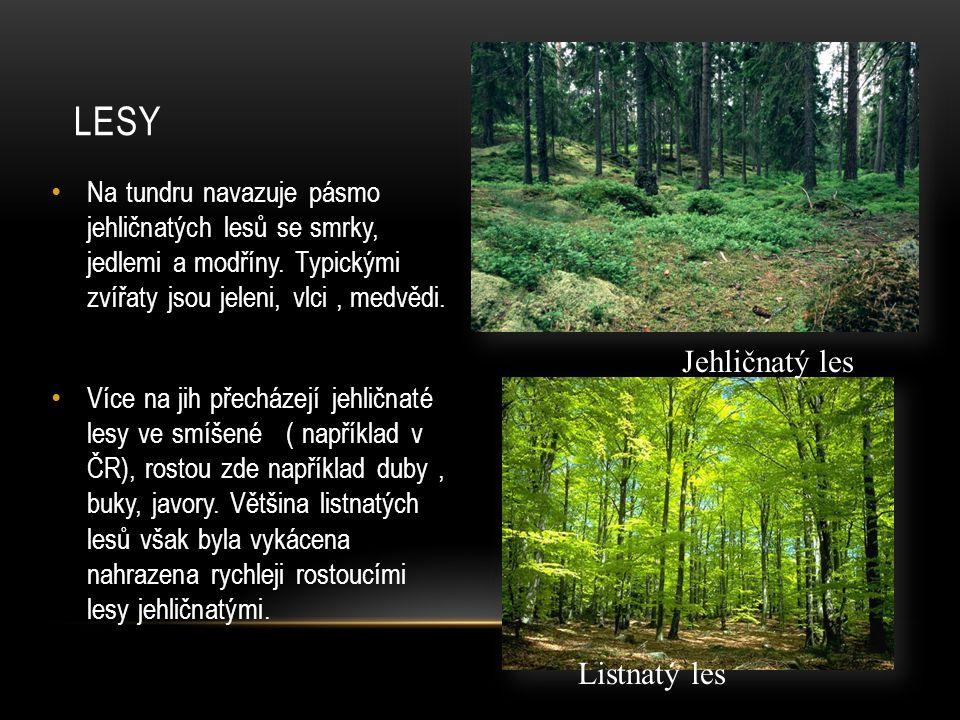 Na tundru navazuje pásmo jehličnatých lesů se smrky, jedlemi a modříny.