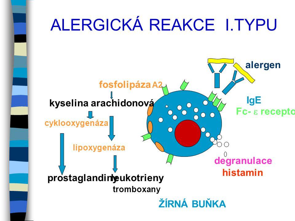 alergen IgE Fc-  receptor degranulace histamin fosfolipáza A2 cyklooxygenáza lipoxygenáza leukotrienyprostaglandiny tromboxany kyselina arachidonová ŽÍRNÁ BUŇKA ALERGICKÁ REAKCE I.TYPU