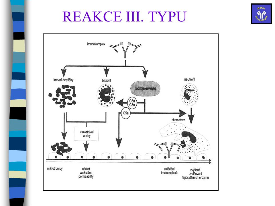 REAKCE III. TYPU