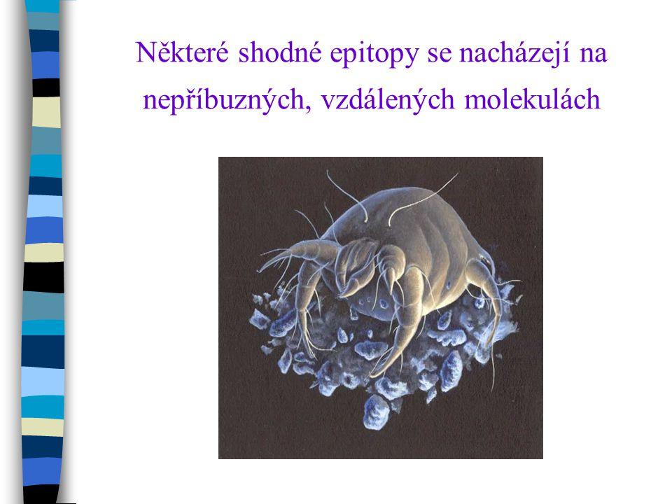 Některé shodné epitopy se nacházejí na nepříbuzných, vzdálených molekulách