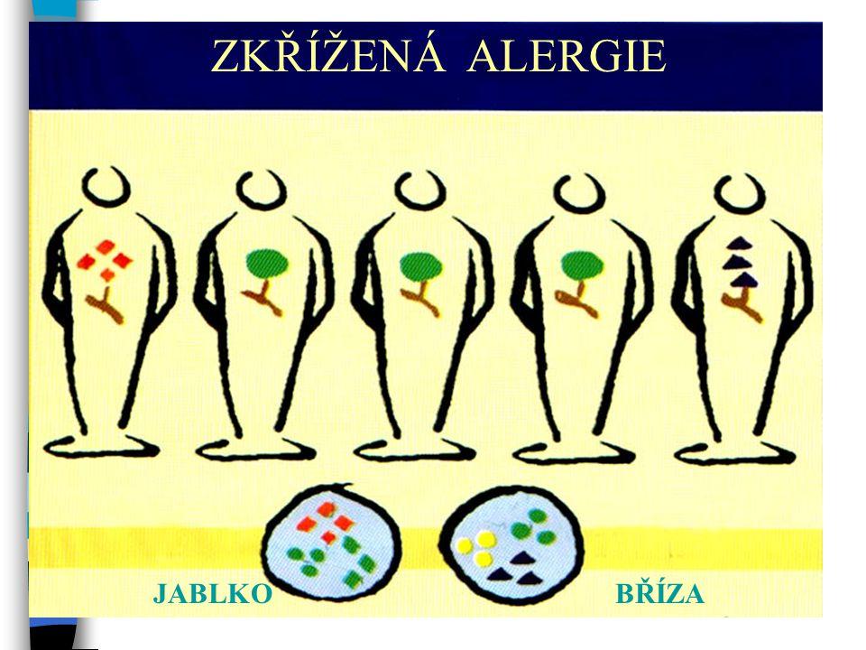 Zkřížená alergie JABLKOBŘÍZA ZKŘÍŽENÁ ALERGIE
