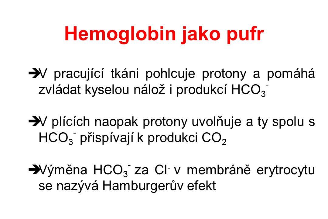 Hemoglobin jako pufr  V pracující tkáni pohlcuje protony a pomáhá zvládat kyselou nálož i produkcí HCO 3 -  V plících naopak protony uvolňuje a ty s