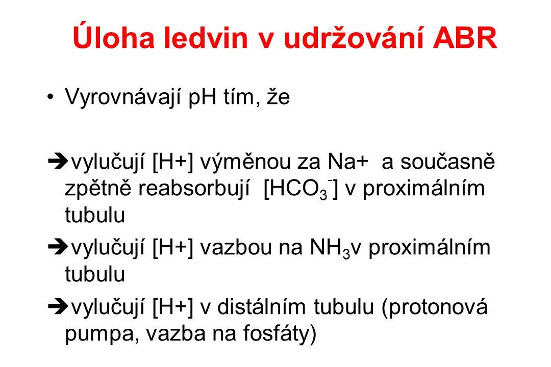 Úloha ledvin v udržování ABR Vyrovnávají pH tím, že  vylučují [H+] výměnou za Na+ a současně zpětně reabsorbují [HCO 3 - ] v proximálním tubulu  vyl