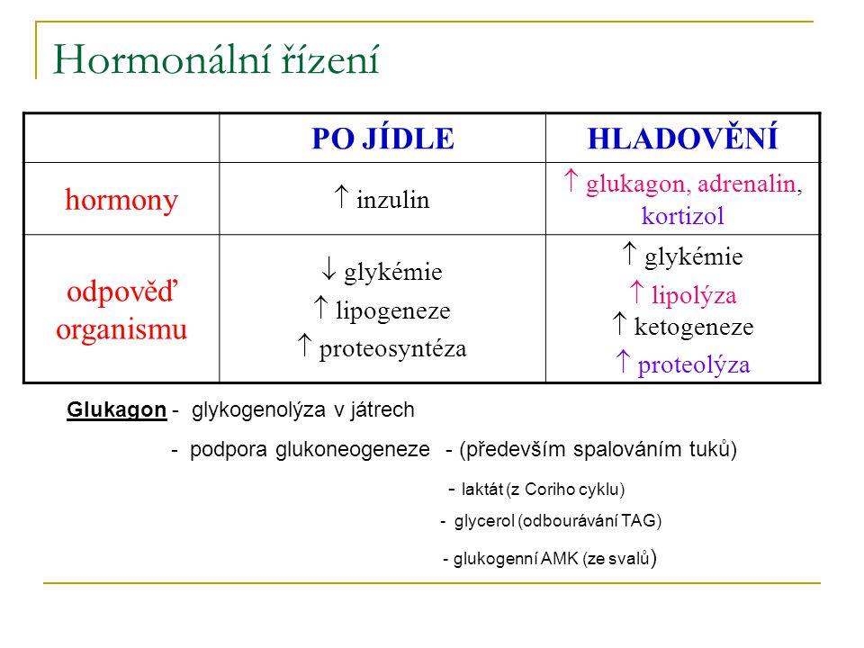 Hormonální řízení PO JÍDLEHLADOVĚNÍ hormony  inzulin  glukagon, adrenalin, kortizol odpověď organismu  glykémie  lipogeneze  proteosyntéza  glyk