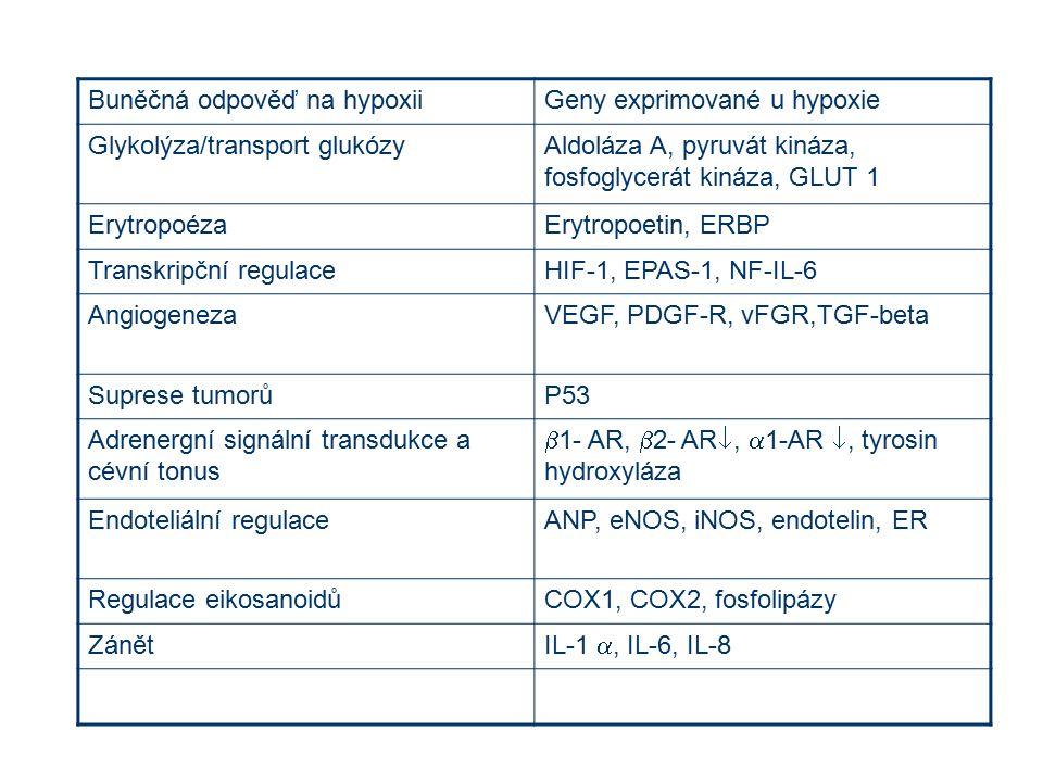 Buněčná odpověď na hypoxiiGeny exprimované u hypoxie Glykolýza/transport glukózyAldoláza A, pyruvát kináza, fosfoglycerát kináza, GLUT 1 ErytropoézaEr