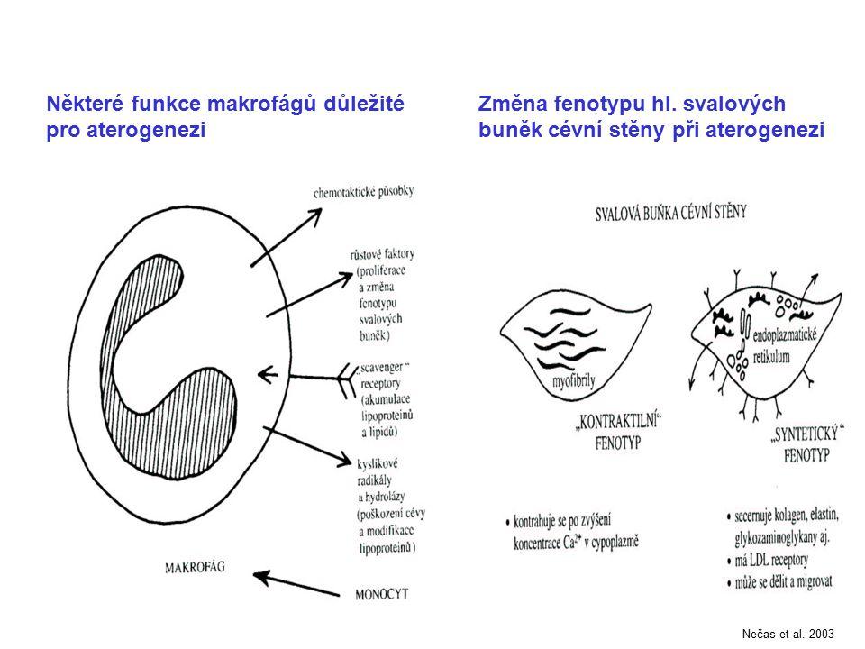 Některé funkce makrofágů důležité pro aterogenezi Změna fenotypu hl. svalových buněk cévní stěny při aterogenezi Nečas et al. 2003