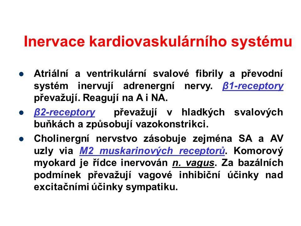 Inervace kardiovaskulárního systému Atriální a ventrikulární svalové fibrily a převodní systém inervují adrenergní nervy. β1-receptory převažují. Reag