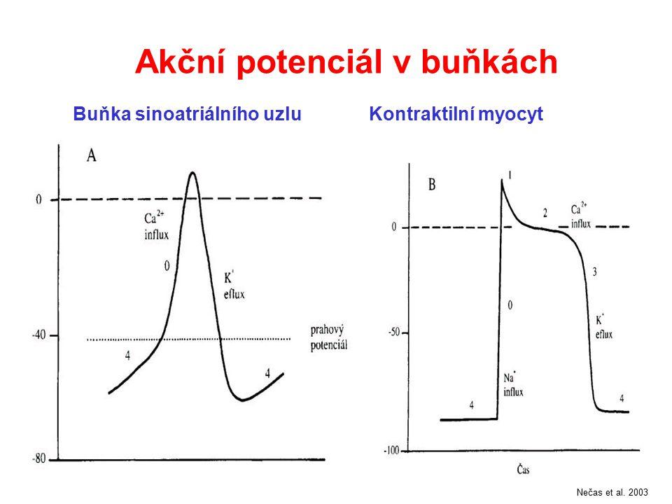 Akční potenciál v buňkách Buňka sinoatriálního uzluKontraktilní myocyt Nečas et al. 2003