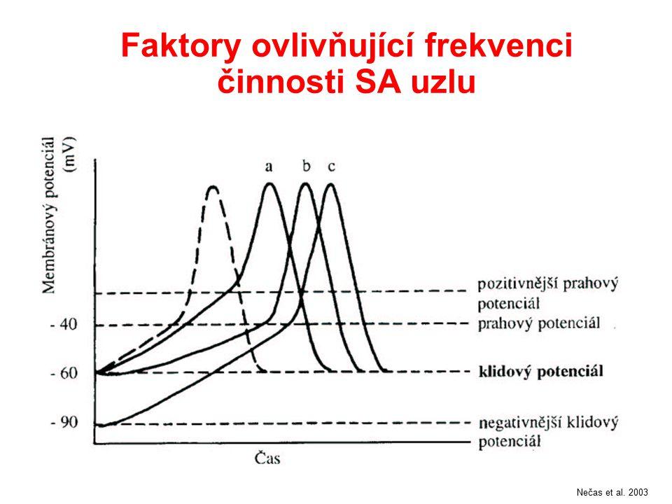 Převod vzruchu ze síní na komory Nečas et al. 2003 Přídatný vodivý svazek