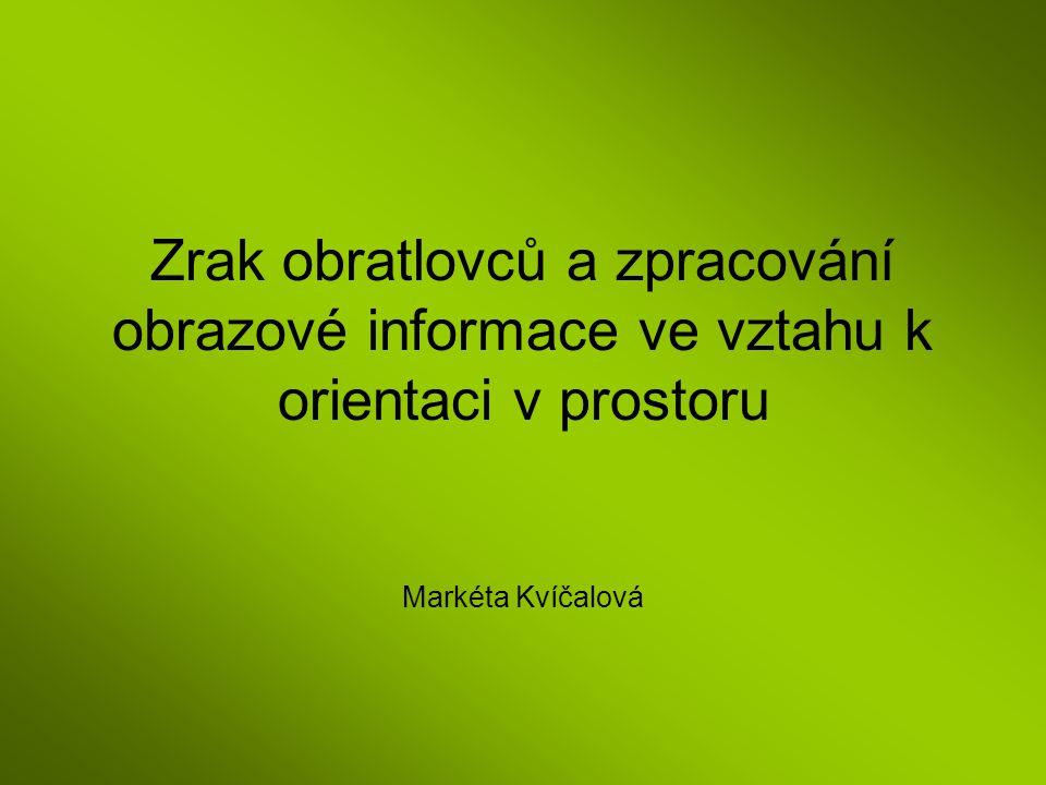 Zrak obratlovců a zpracování obrazové informace ve vztahu k orientaci v prostoru Markéta Kvíčalová