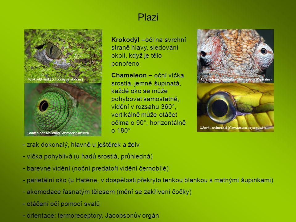Plazi Krokodýl nilský (Crocodyus niloticus) Chameleon Mellerův (Chamaeleo melleri) Užovka ostronosá (Gonyosoma oxycephala) Chameleon Jemenský (Chamael