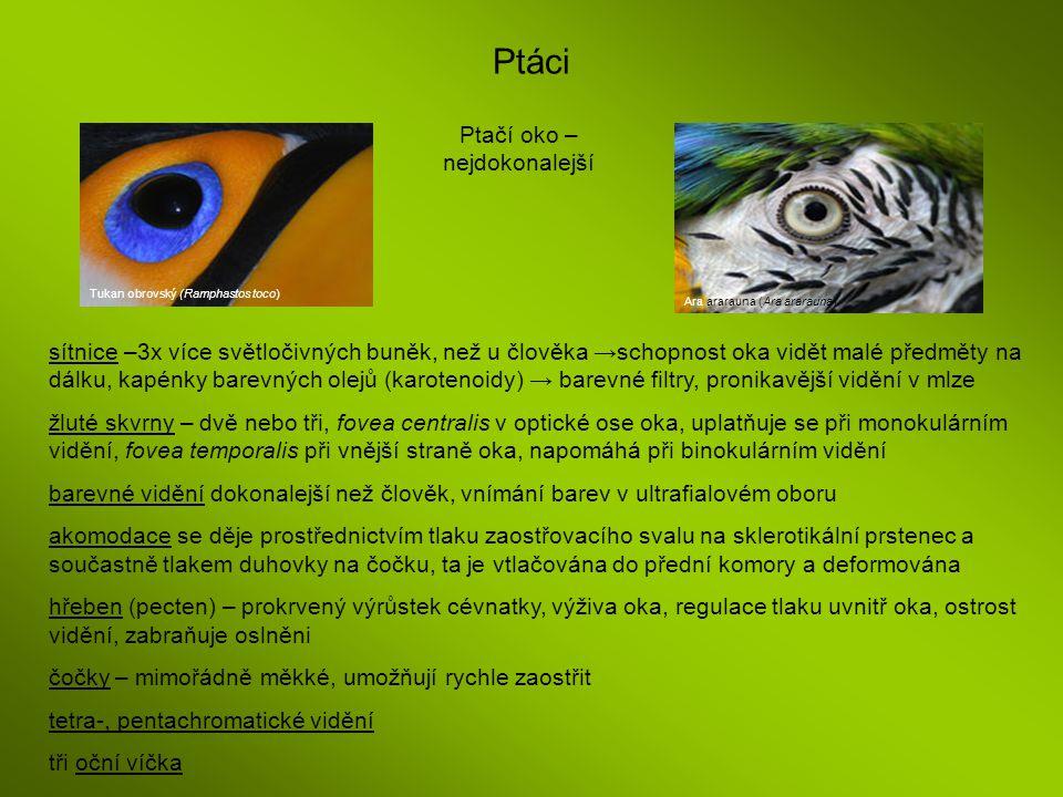 Ptáci Tukan obrovský (Ramphastos toco) Ara ararauna (Ara ararauna) Ptačí oko – nejdokonalejší sítnice –3x více světločivných buněk, než u člověka →sch