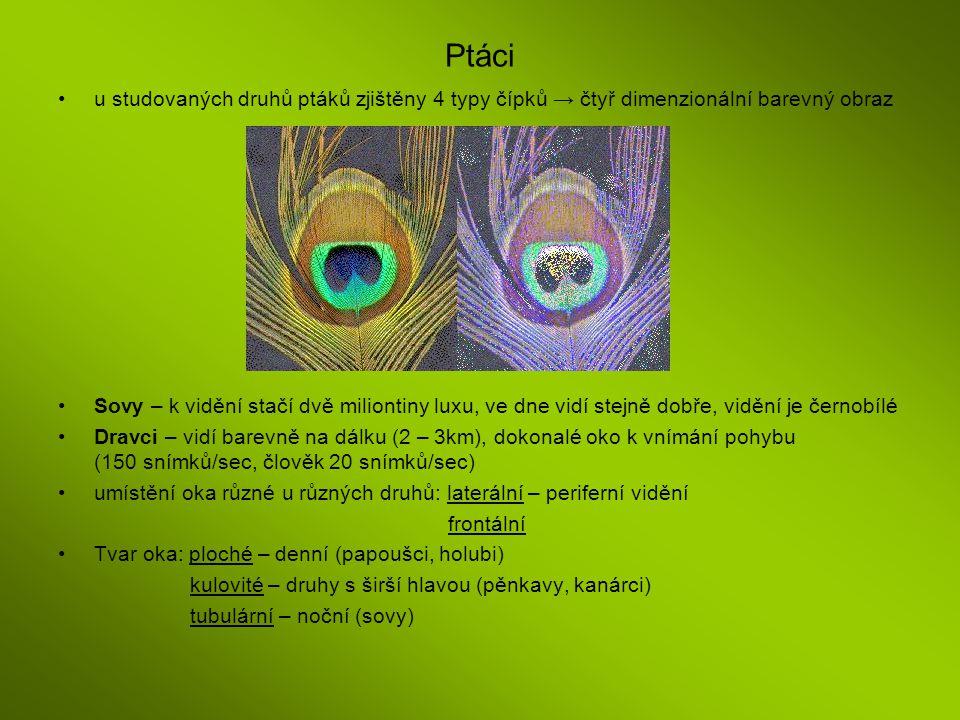 Ptáci u studovaných druhů ptáků zjištěny 4 typy čípků → čtyř dimenzionální barevný obraz Sovy – k vidění stačí dvě miliontiny luxu, ve dne vidí stejně