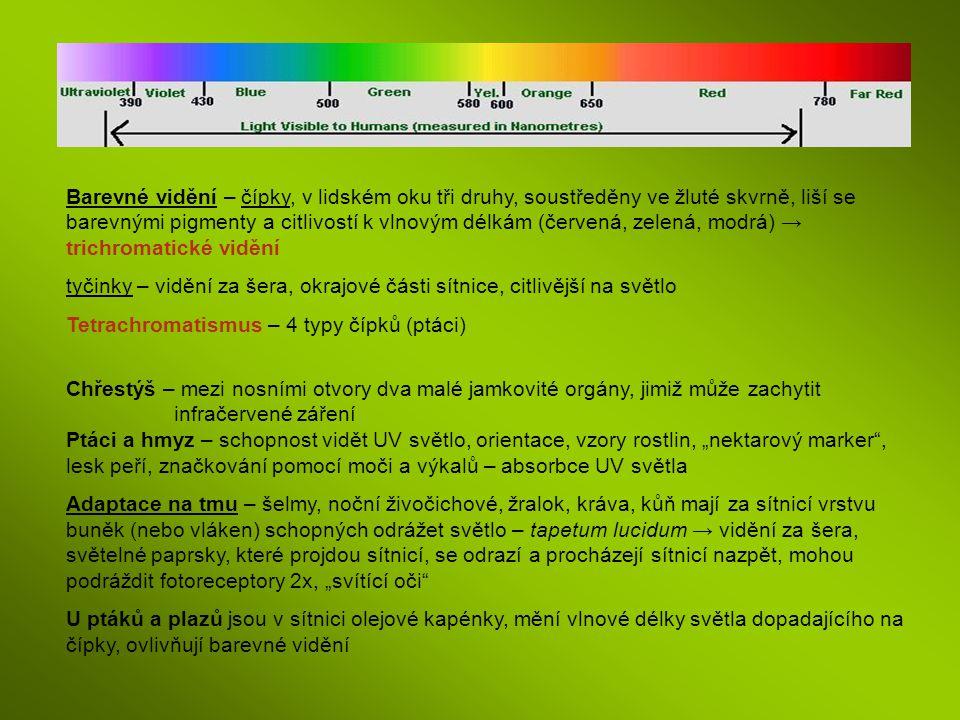 Barevné vidění – čípky, v lidském oku tři druhy, soustředěny ve žluté skvrně, liší se barevnými pigmenty a citlivostí k vlnovým délkám (červená, zelen