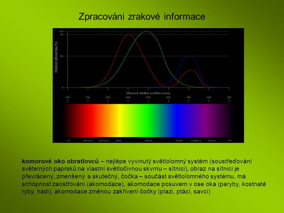 Zpracováni zrakové informace komorové oko obratlovců – nejlépe vyvinutý světlolomný systém (soustřeďování světelných paprsků na vlastní světločivnou s