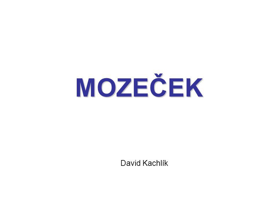 MOZEČEK David Kachlík