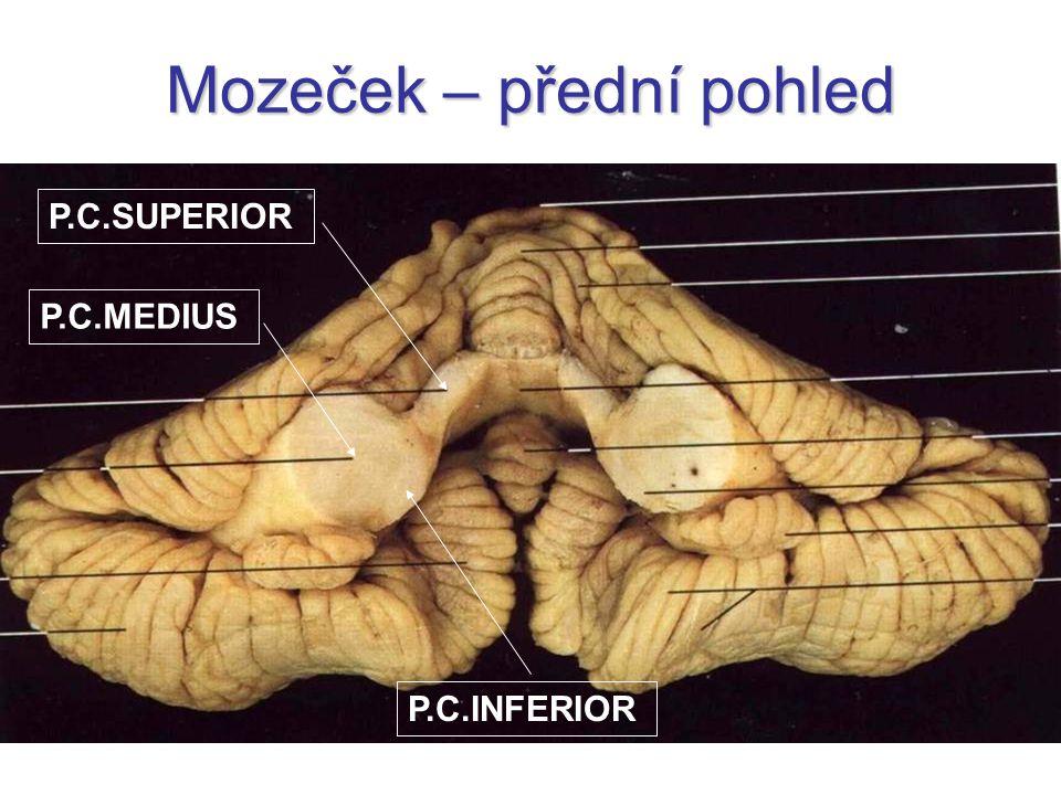 Mozeček – přední pohled P.C.MEDIUS P.C.SUPERIOR P.C.INFERIOR