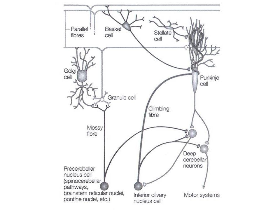 Zapojení buněk