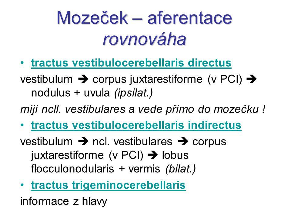 tractus vestibulocerebellaris directus vestibulum  corpus juxtarestiforme (v PCI)  nodulus + uvula (ipsilat.) míjí ncll. vestibulares a vede přímo d