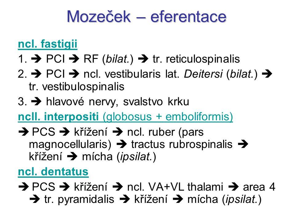 ncl. fastigii 1.  PCI  RF (bilat.)  tr. reticulospinalis 2.  PCI  ncl. vestibularis lat. Deitersi (bilat.)  tr. vestibulospinalis 3.  hlavové n