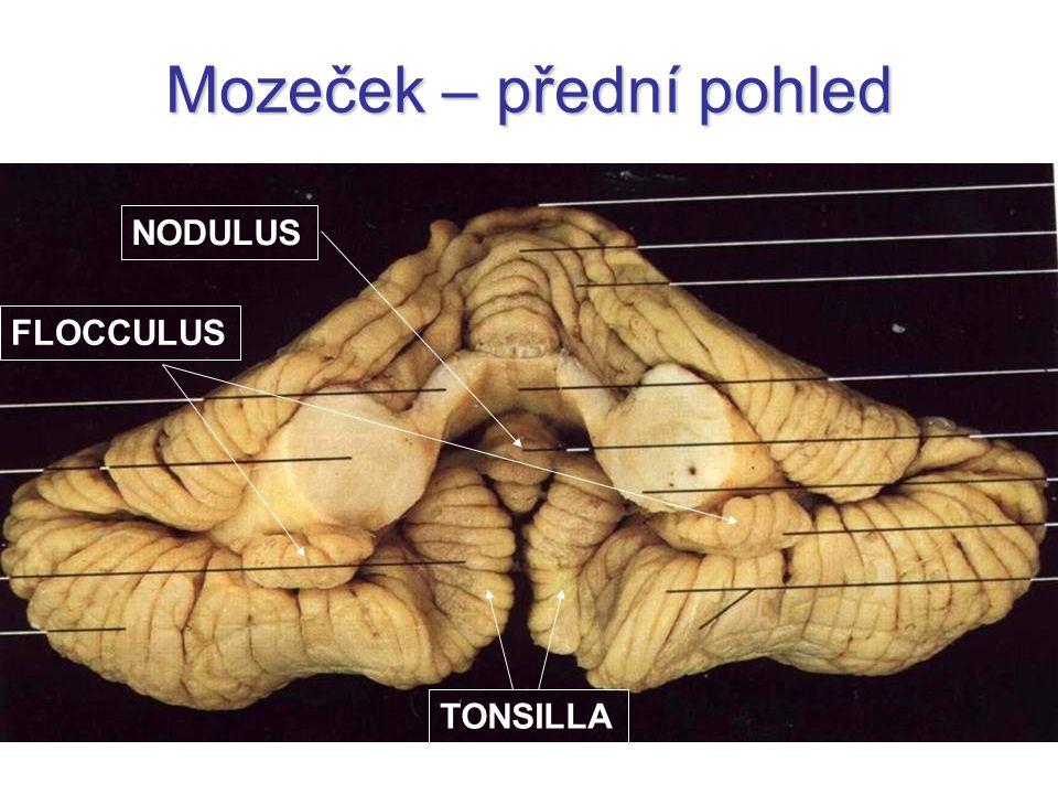 Mozeček – přední pohled TONSILLA FLOCCULUS NODULUS