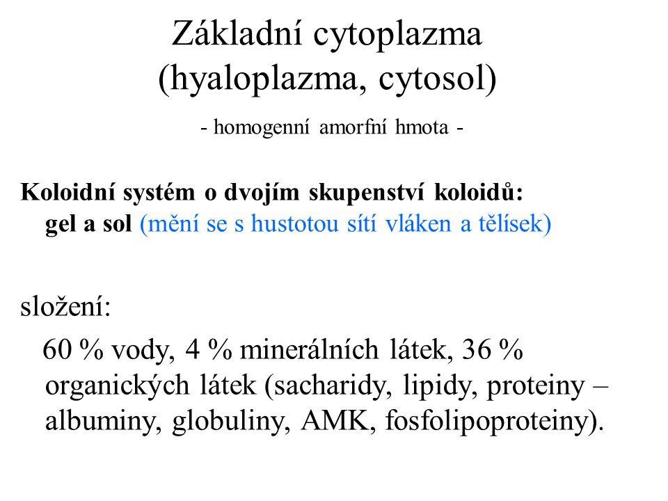 Základní cytoplazma (hyaloplazma, cytosol) - homogenní amorfní hmota - Koloidní systém o dvojím skupenství koloidů: gel a sol (mění se s hustotou sítí