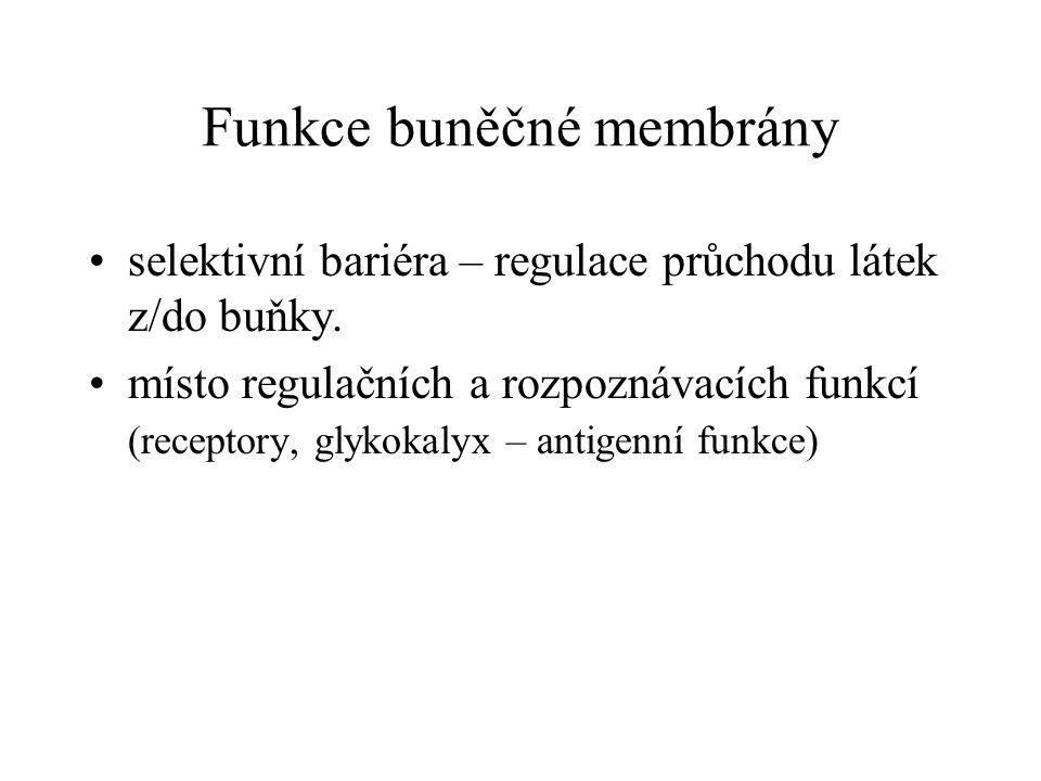 Funkce buněčné membrány selektivní bariéra – regulace průchodu látek z/do buňky. místo regulačních a rozpoznávacích funkcí (receptory, glykokalyx – an