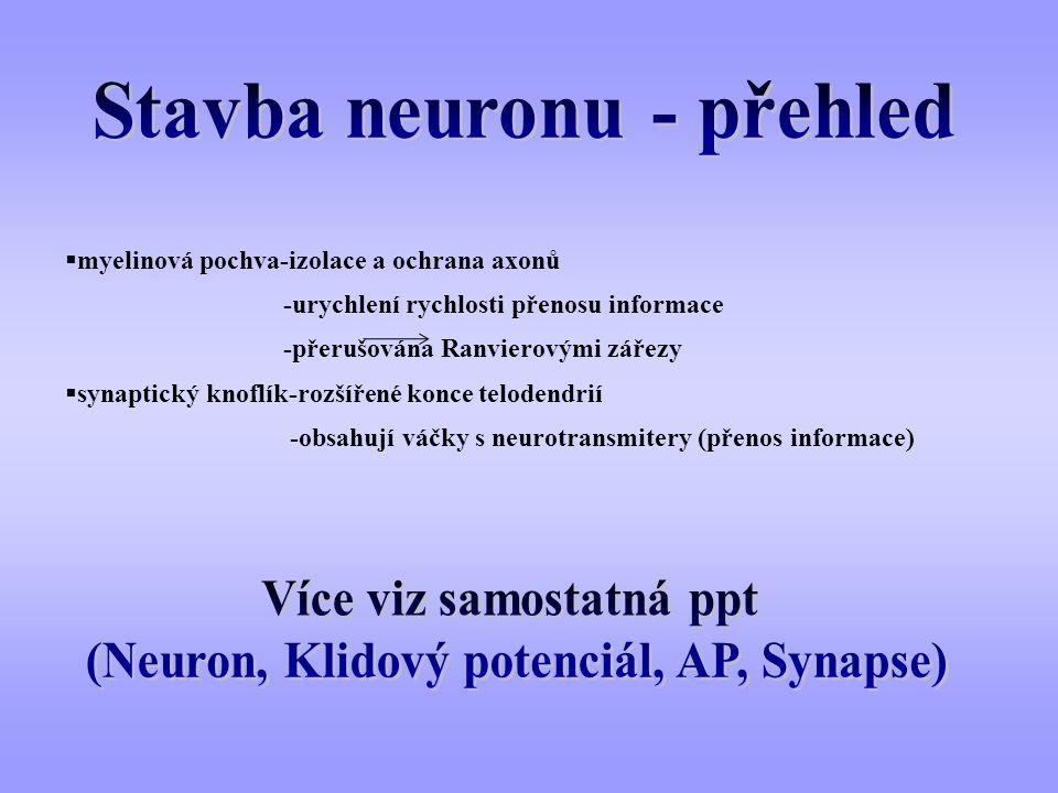  myelinová pochva-izolace a ochrana axonů -urychlení rychlosti přenosu informace -přerušována Ranvierovými zářezy  synaptický knoflík-rozšířené konc