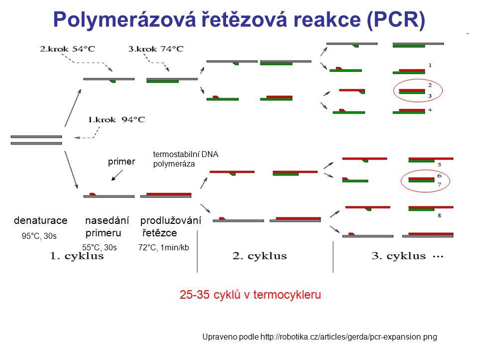Polymerázová řetězová reakce (PCR) denaturace nasedání prodlužování primeru řetězce primer termostabilní DNA polymeráza Upraveno podle http://robotika.cz/articles/gerda/pcr-expansion.png 25-35 cyklů v termocykleru 55°C, 30s 95°C, 30s 72°C, 1min/kb …