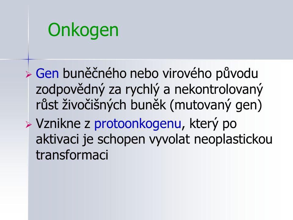 Onkogen  Gen buněčného nebo virového původu zodpovědný za rychlý a nekontrolovaný růst živočišných buněk (mutovaný gen)  Vznikne z protoonkogenu, kt