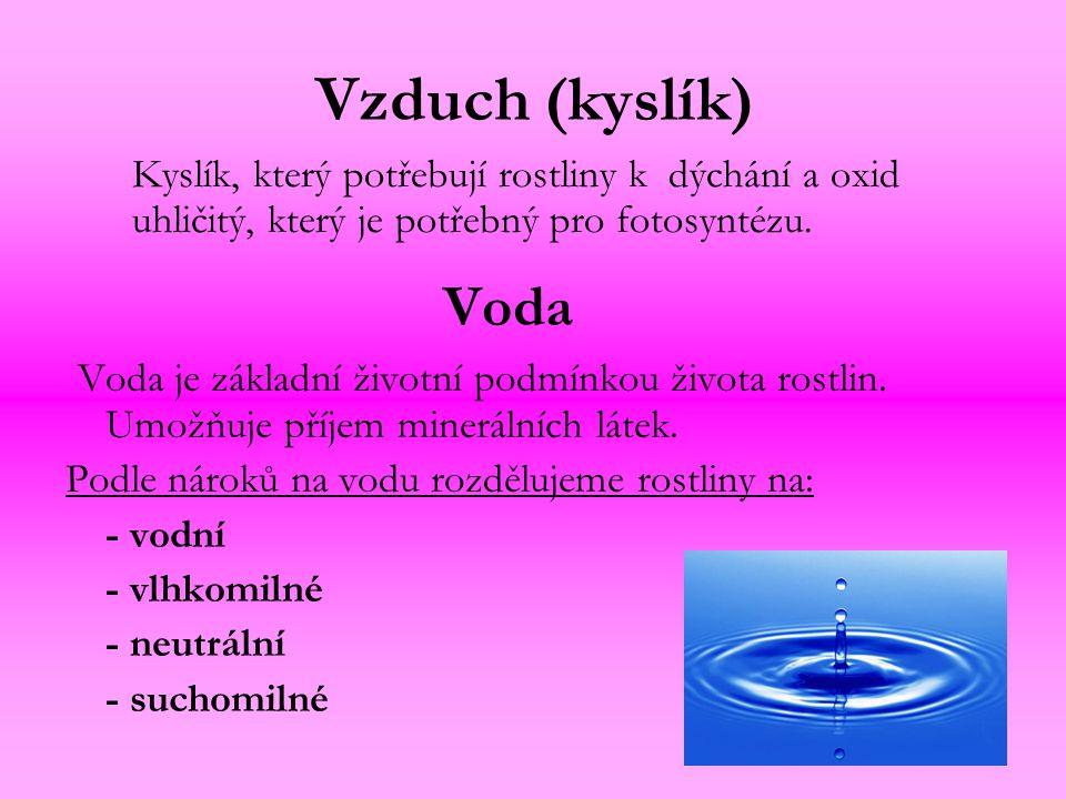 Chladnomilné cibuloviny Bledule jarní (Leucojum vernum) Sněženka podsněžník (Galanthus nivalis) Narcis ( Narcissus)