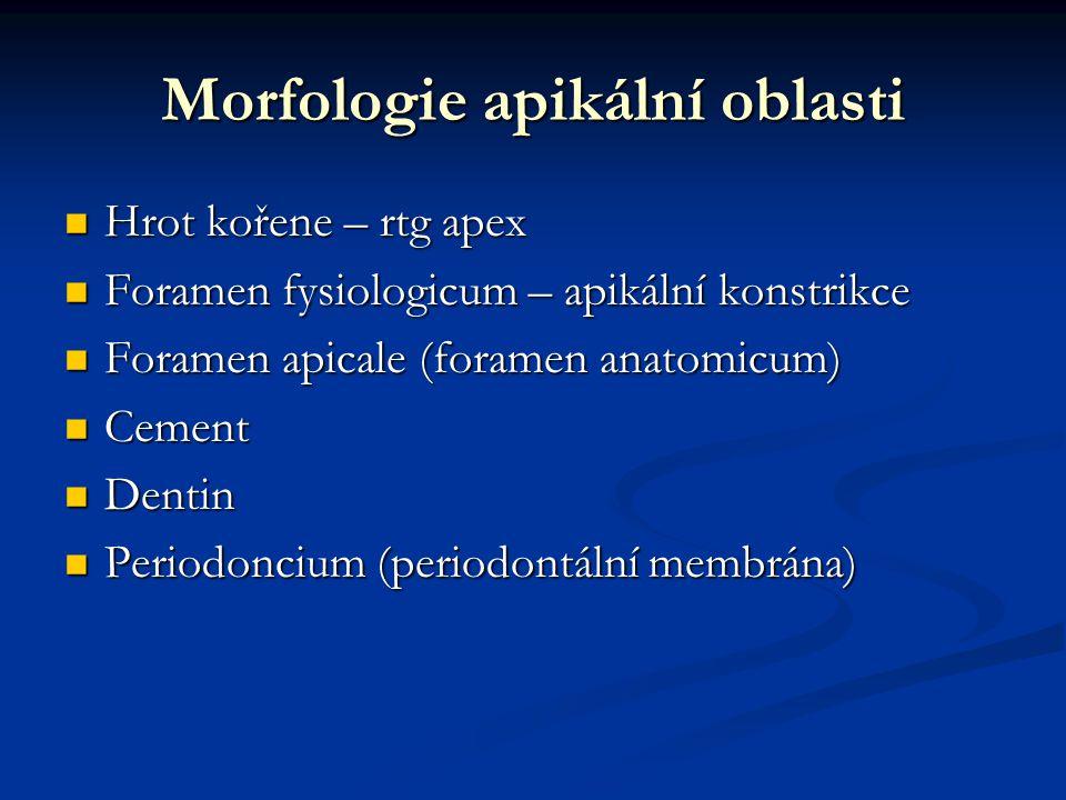 Anatomie oblasti kořenového hrotu 1.Rentgenologický apex 2.Foramen apicale 3.Fysiologické zúžení – apik.konstrikce 4.Vazivo periodontální štěrbiny 5.Kořenový cement 6.Dentin Podle Guldenera a Langelanda