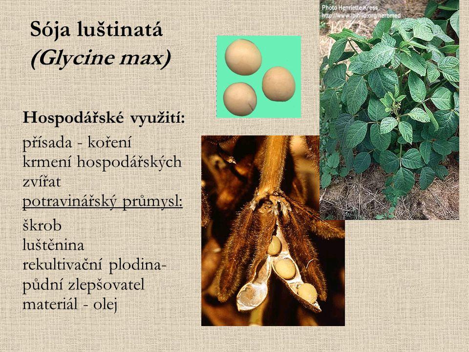 Sója luštinatá (Glycine max) Hospodářské využití: přísada - koření krmení hospodářských zvířat potravinářský průmysl: škrob luštěnina rekultivační plodina- půdní zlepšovatel materiál - olej