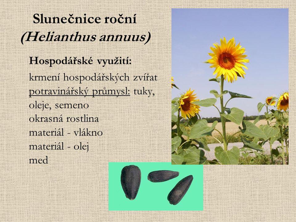 Slunečnice roční (Helianthus annuus) Hospodářské využití: krmení hospodářských zvířat potravinářský průmysl: tuky, oleje, semeno okrasná rostlina materiál - vlákno materiál - olej med