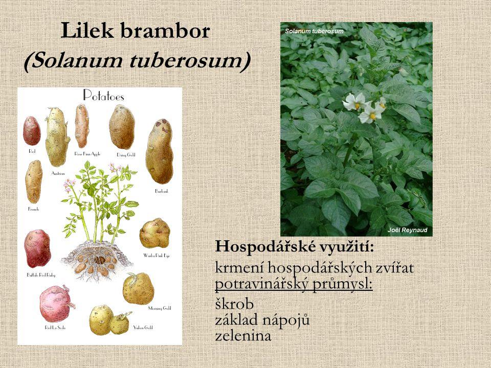 Lilek brambor (Solanum tuberosum) Hospodářské využití: krmení hospodářských zvířat potravinářský průmysl: škrob základ nápojů zelenina