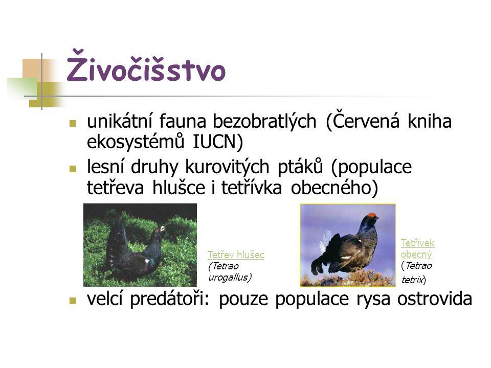 Živočišstvo unikátní fauna bezobratlých (Červená kniha ekosystémů IUCN) lesní druhy kurovitých ptáků (populace tetřeva hlušce i tetřívka obecného) vel
