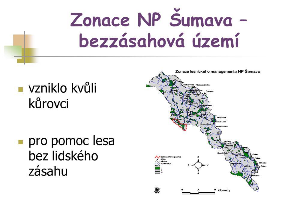 Zonace NP Šumava – bezzásahová území vzniklo kvůli kůrovci pro pomoc lesa bez lidského zásahu