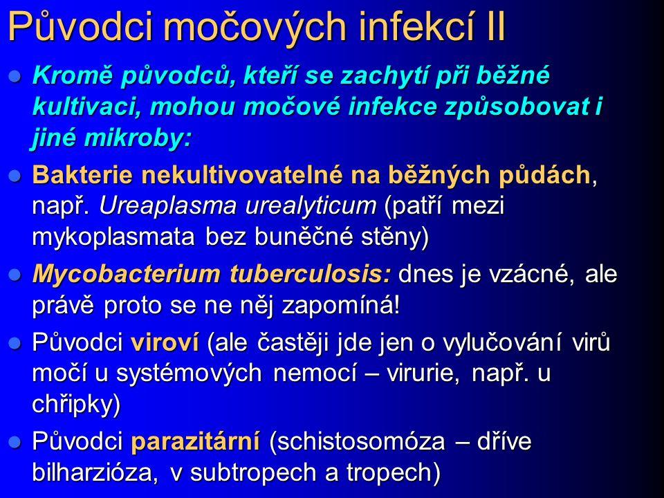 Původci močových infekcí II Kromě původců, kteří se zachytí při běžné kultivaci, mohou močové infekce způsobovat i jiné mikroby: Kromě původců, kteří
