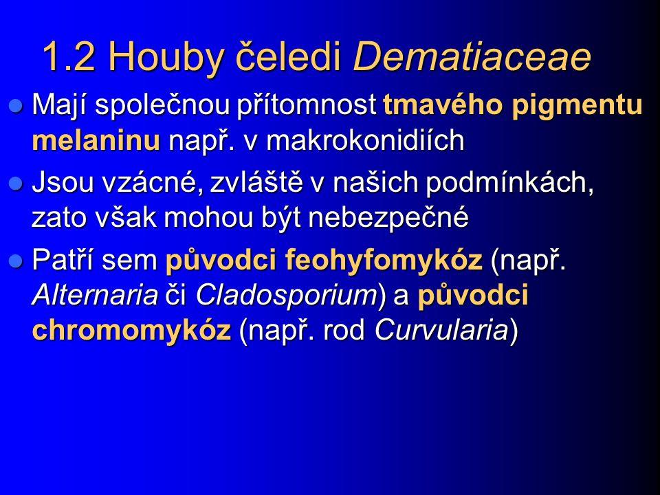 1.2 Houby čeledi Dematiaceae Mají společnou přítomnost tmavého pigmentu melaninu např. v makrokonidiích Mají společnou přítomnost tmavého pigmentu mel