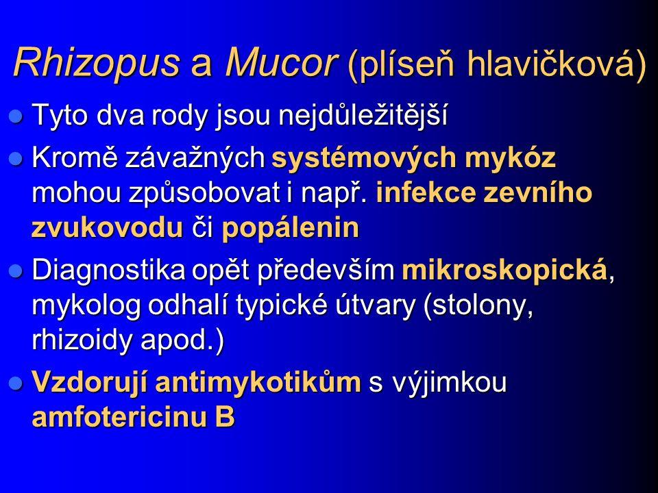 Rhizopus a Mucor (plíseň hlavičková) Tyto dva rody jsou nejdůležitější Tyto dva rody jsou nejdůležitější Kromě závažných systémových mykóz mohou způso