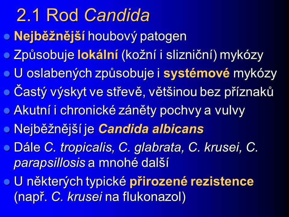 2.1 Rod Candida Nejběžnější houbový patogen Nejběžnější houbový patogen Způsobuje lokální (kožní i slizniční) mykózy Způsobuje lokální (kožní i slizni