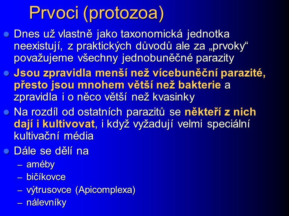 """Prvoci (protozoa) Dnes už vlastně jako taxonomická jednotka neexistují, z praktických důvodů ale za """"prvoky"""" považujeme všechny jednobuněčné parazity"""