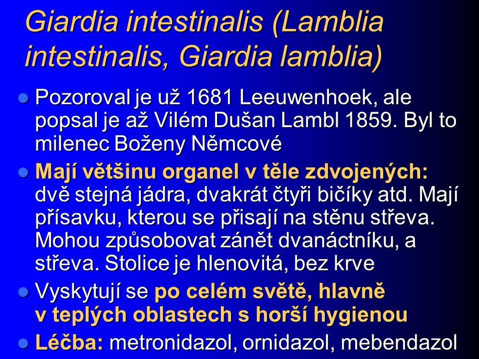 Giardia intestinalis (Lamblia intestinalis, Giardia lamblia) Pozoroval je už 1681 Leeuwenhoek, ale popsal je až Vilém Dušan Lambl 1859. Byl to milenec
