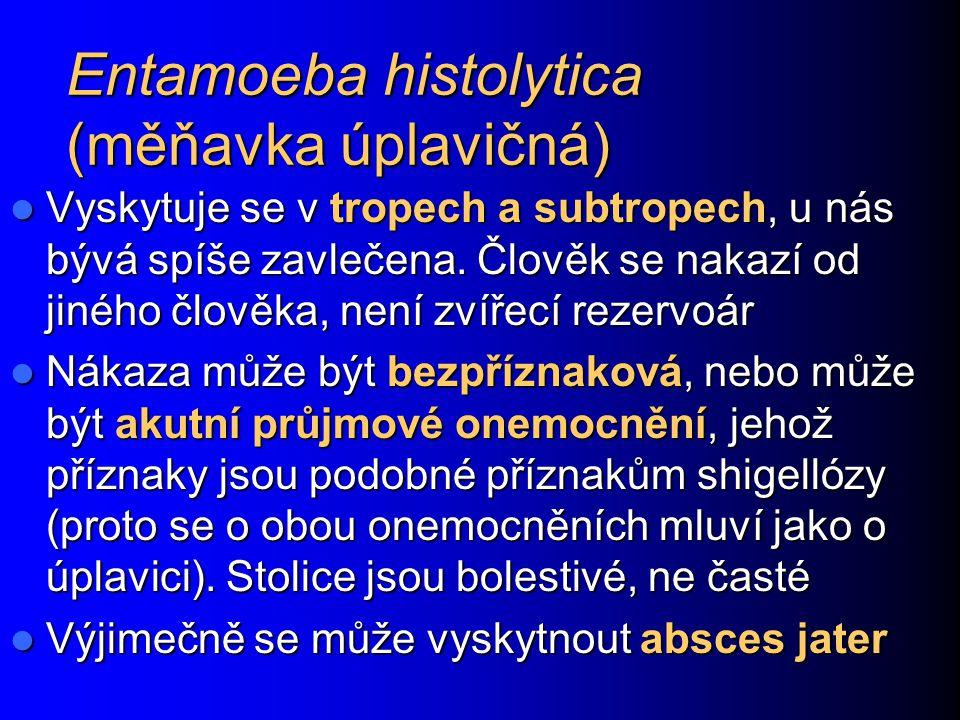 Entamoeba histolytica (měňavka úplavičná) Vyskytuje se v tropech a subtropech, u nás bývá spíše zavlečena. Člověk se nakazí od jiného člověka, není zv