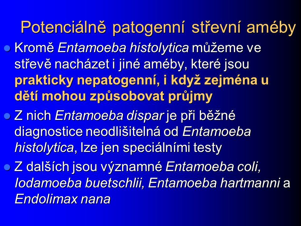 Potenciálně patogenní střevní améby Kromě Entamoeba histolytica můžeme ve střevě nacházet i jiné améby, které jsou prakticky nepatogenní, i když zejmé