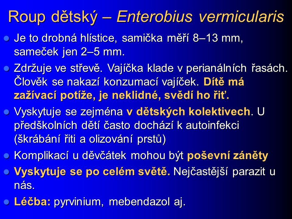 Roup dětský – Enterobius vermicularis Je to drobná hlístice, samička měří 8–13 mm, sameček jen 2–5 mm. Je to drobná hlístice, samička měří 8–13 mm, sa