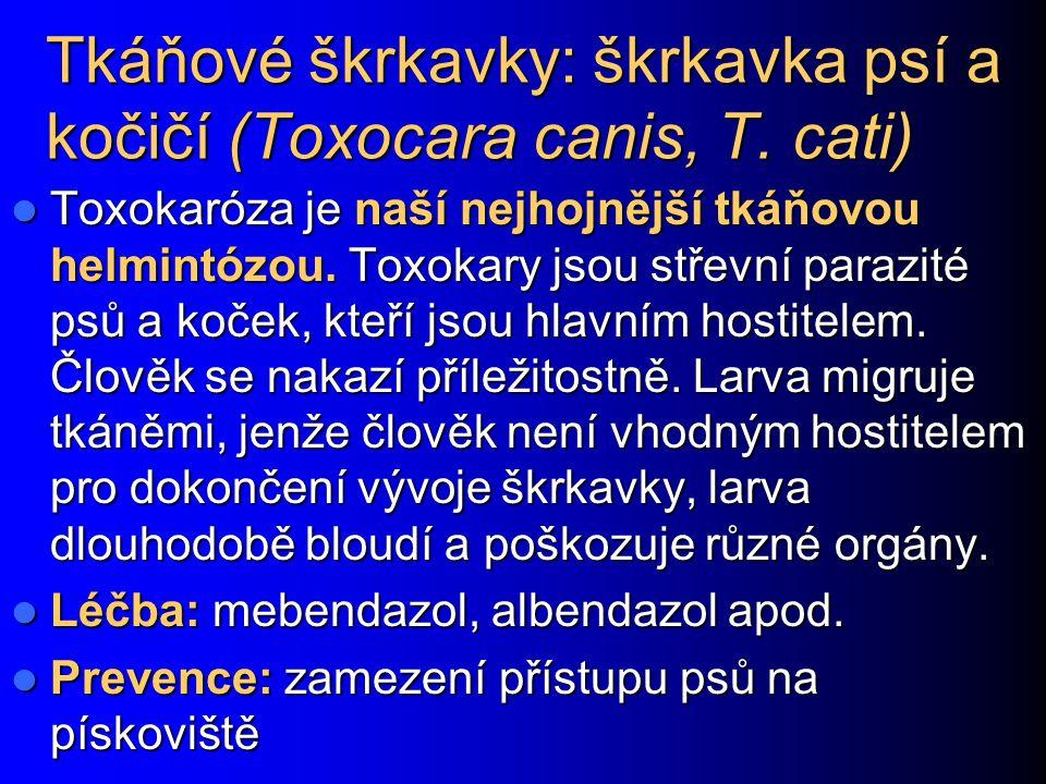 Tkáňové škrkavky: škrkavka psí a kočičí (Toxocara canis, T. cati) Toxokaróza je naší nejhojnější tkáňovou helmintózou. Toxokary jsou střevní parazité