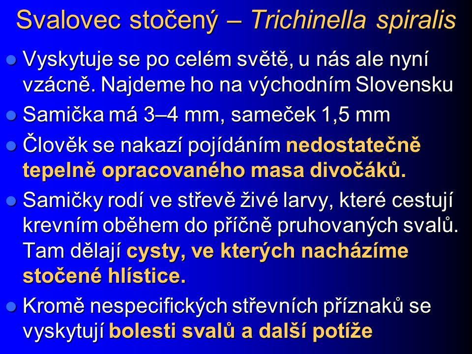 Svalovec stočený – Trichinella spiralis Vyskytuje se po celém světě, u nás ale nyní vzácně. Najdeme ho na východním Slovensku Vyskytuje se po celém sv