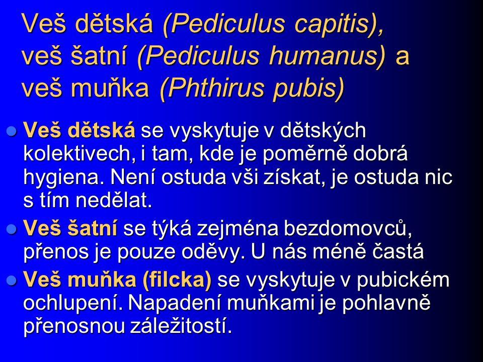 Veš dětská (Pediculus capitis), veš šatní (Pediculus humanus) a veš muňka (Phthirus pubis) Veš dětská se vyskytuje v dětských kolektivech, i tam, kde